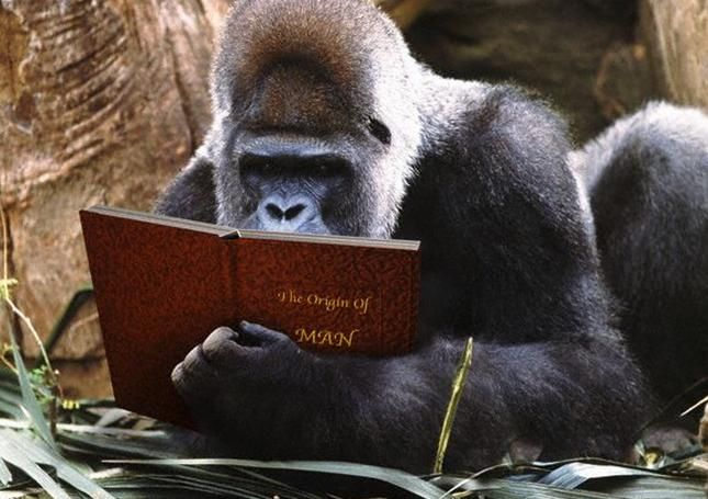 Image result for gorilla reading
