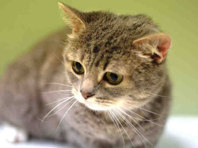 Safe Pulled By Empty Cages Collective To Be Destroyed 12 2 14 Nyc Gorgeous Friendly Girl Manhattan Center Average G Animals My Animal Cat Parenting