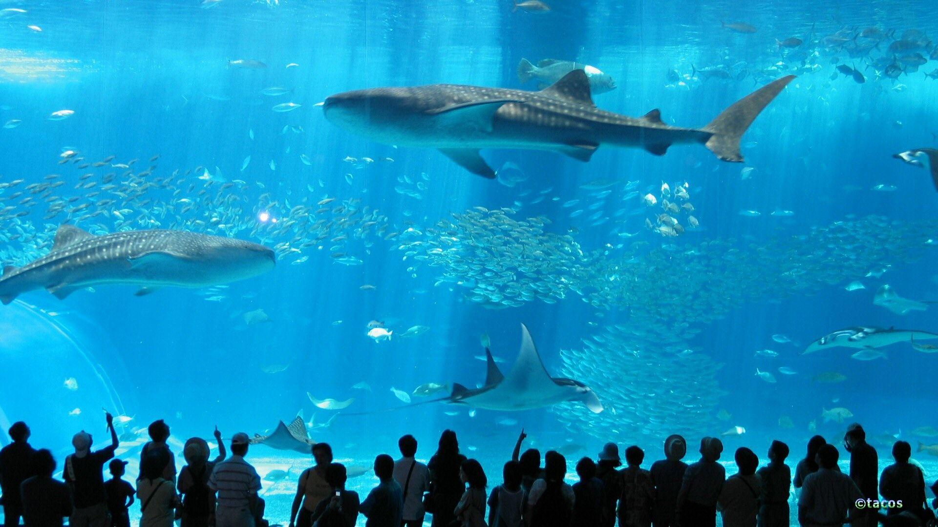 Okinawa Churaumi Aquarium In Japan I Believe It S The Largest In The World Okinawa Japan Travel Japan Beach