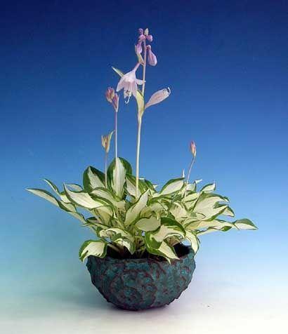 Hostas Indoor Plants House Plants Garden Planting Flowers