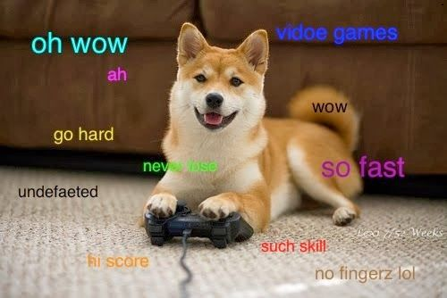 2e95ff0caff766db372c664f1be524fe such carnivalesque doge! such costum! one important thing, doge