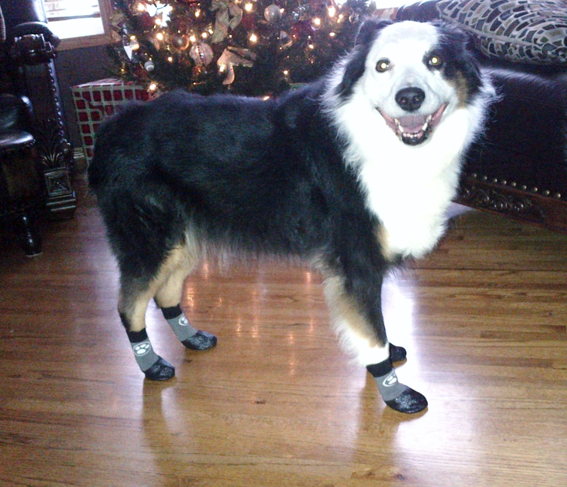 Grippers Non Slip Dog Socks Awesome Senior Dogs Dog