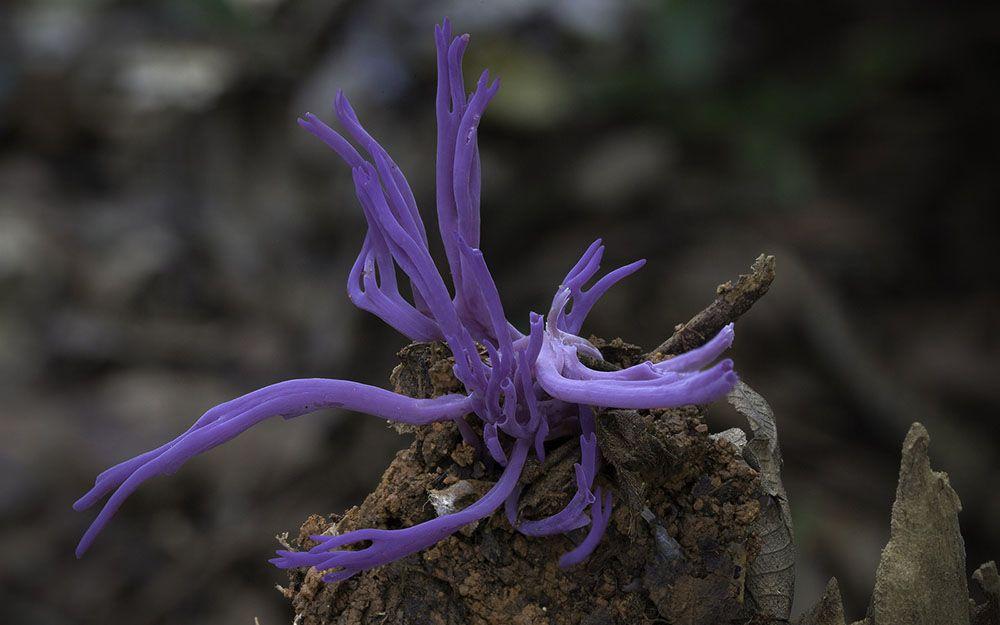 Há mais de um ano o fotógrafo Steve Axford se aventura em áreas florestais para registrar as formas incomuns de fungos que ele encontra em crescimento. A variedade de cores, formas e tamanhos encon…