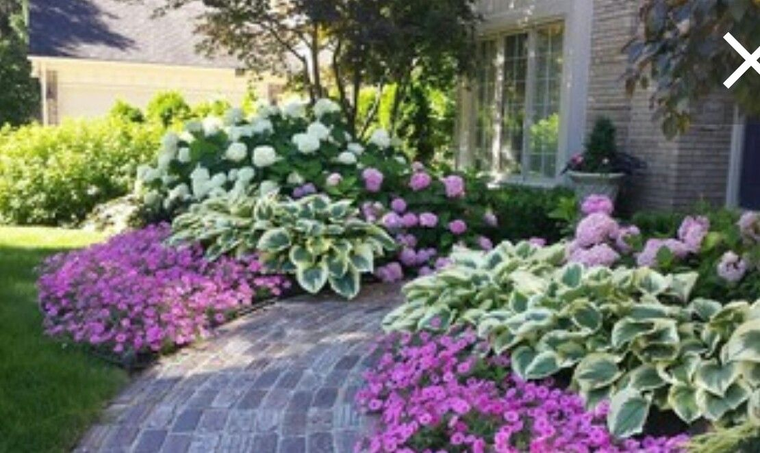 These Hydrangeas And Hostas Complement Each Other Beautifully Hydrangea Landscaping Front Yard Landscaping Design Front Yard Garden