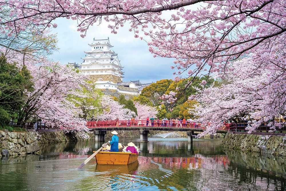 Worldly Relations From Ireland To Japan Phoenix Home Garden Cherry Blossom Japan Japan Cherry Blossom Season Himeji Castle
