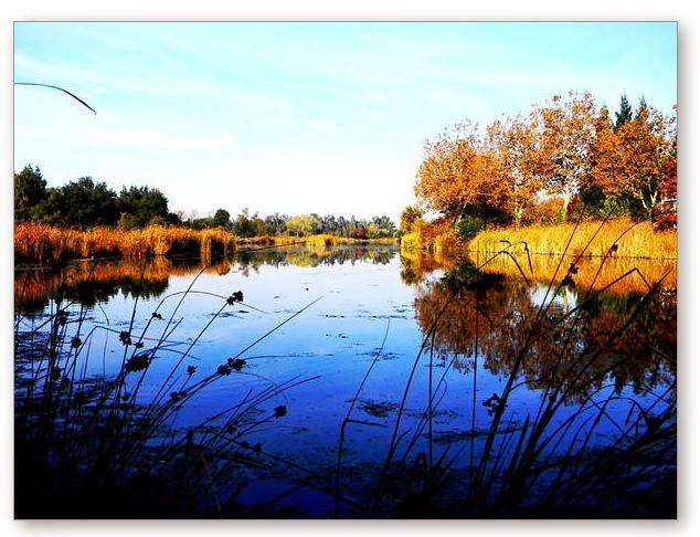 Contemporary Artists of California: Calm Water Landscape Nature Pond Photography by Lisa McKinney