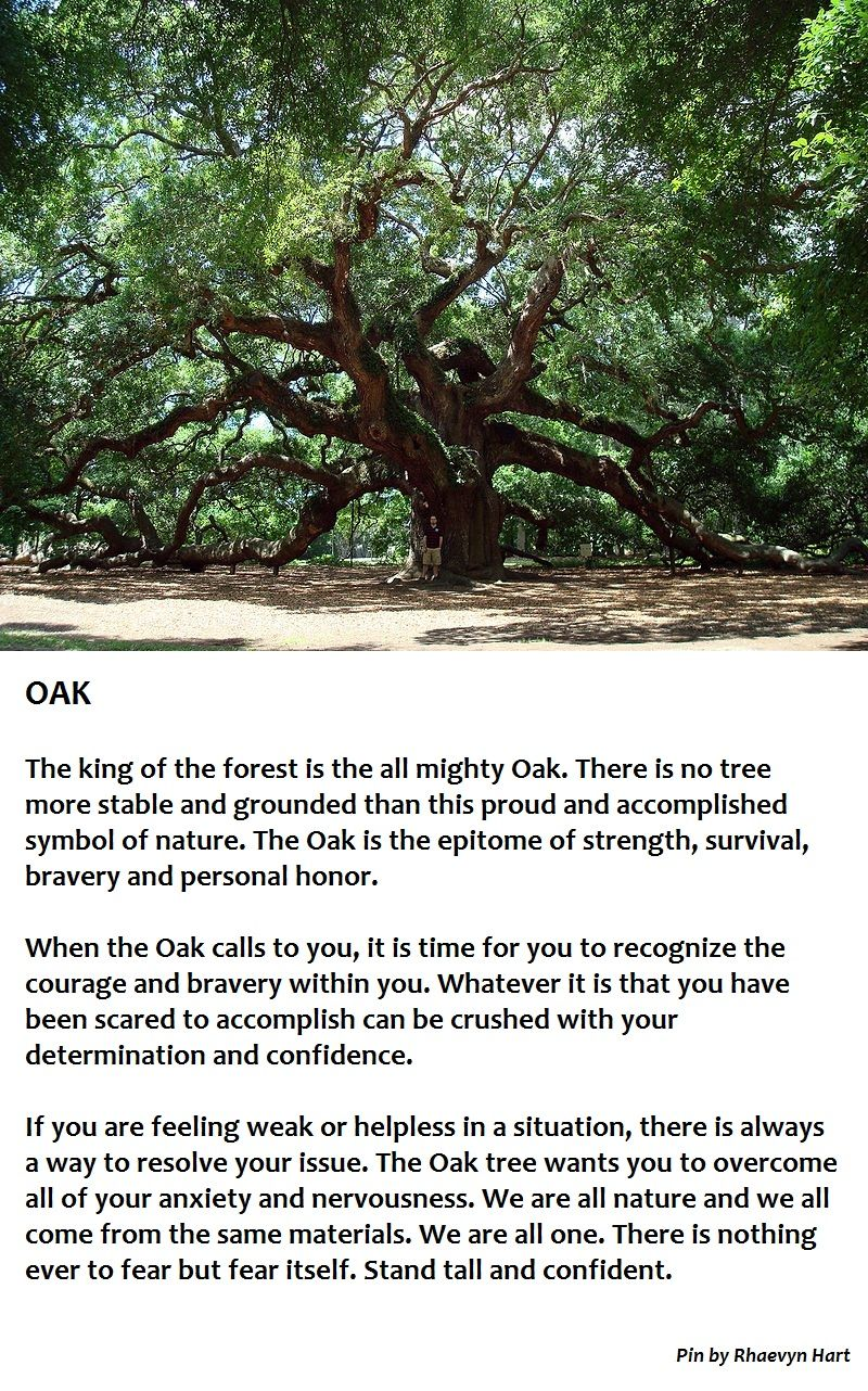 Oak tree symbolism stand tall pinteres oak tree symbolism stand tall buycottarizona Images