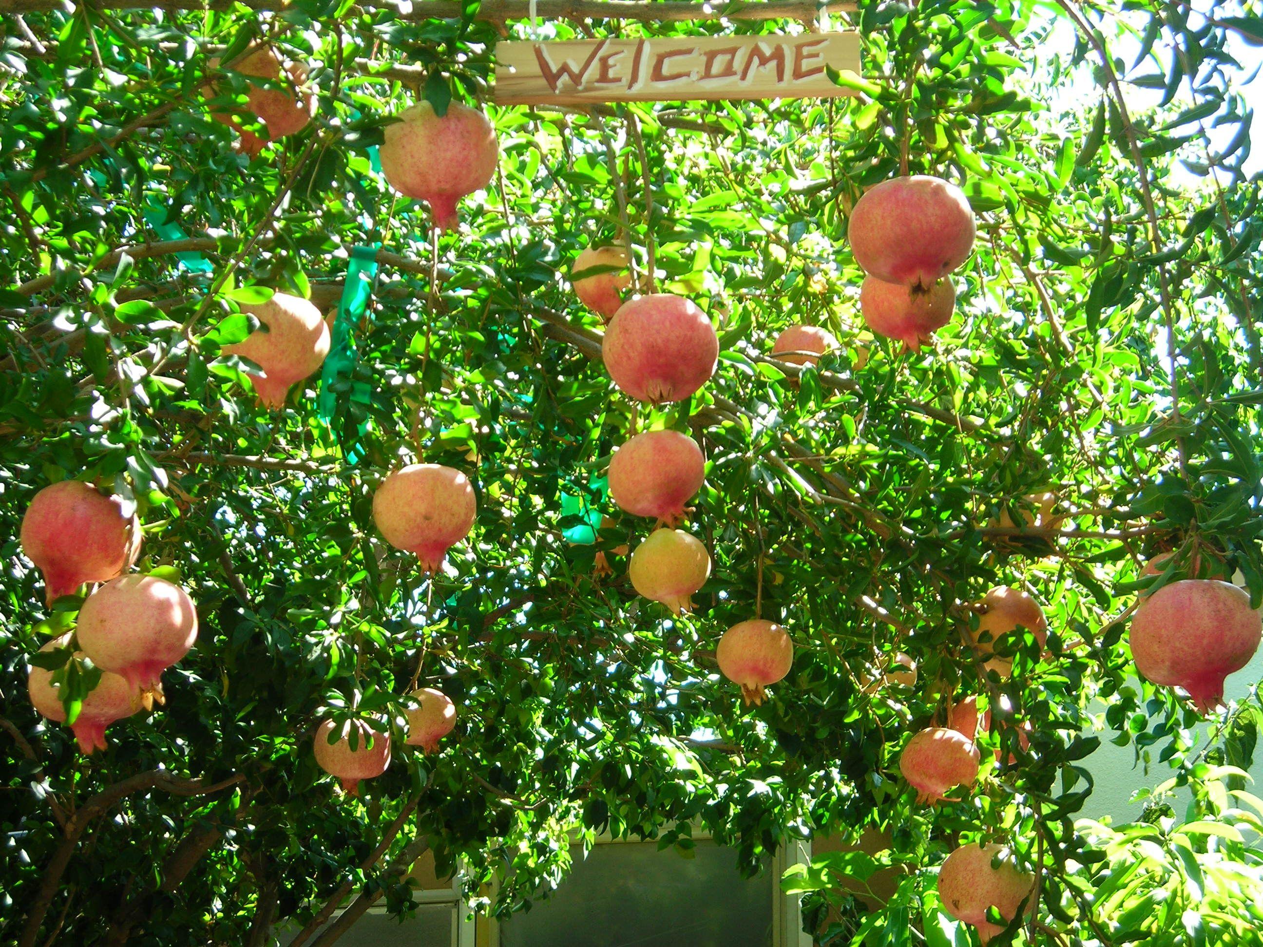 Trees - Houston Fruit Trees