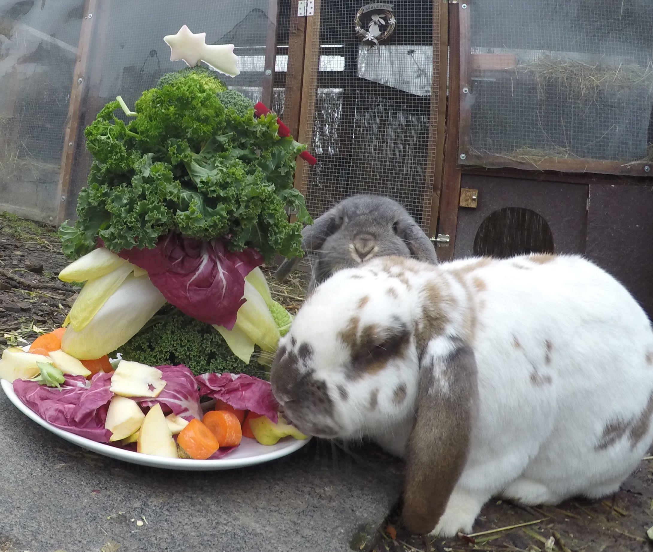 Pin Von Beatriz O Auf Conejitos Ardillas Y Gatos Kaninchengehege Kaninchen Hase