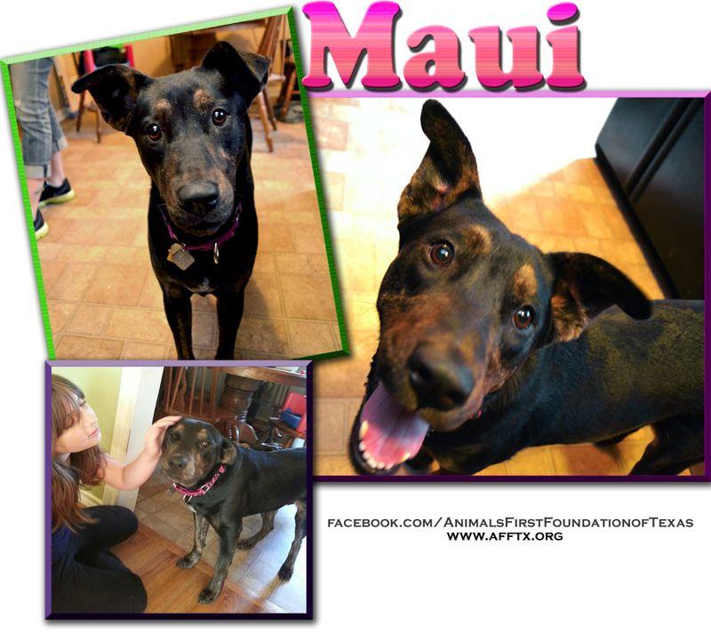 Adopt Mason on Animals, Pets, Australian cattle dog