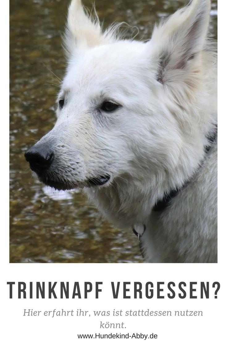 Unser Erstes Buch Lifehacks Fur Hunde Werbung Hundekind Abby Hundeblog Hunde Hunde Welpen Erziehung Gesunde Hunde