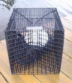 Pinfish bait fish traps buoy ft pinterest bait fish for Homemade fish traps