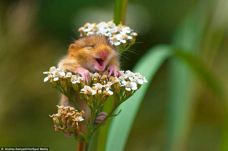 happy mouse. | Smiling animals, Happy animals, Cute animals