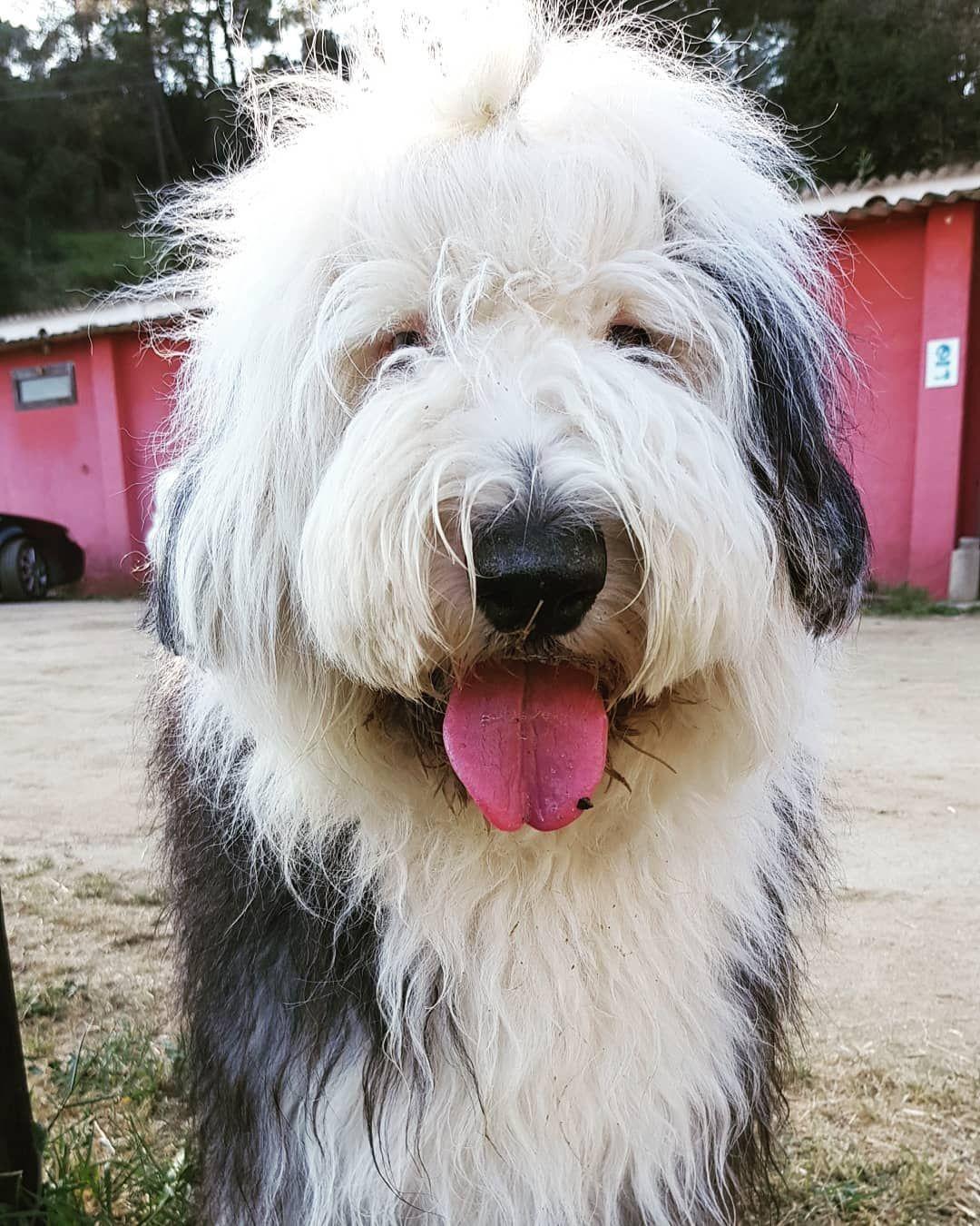 [New] The 10 Best Home Decor (with Pictures) -  Good morning  #dog#dogsofinstagram#sheepdog#oldenglishsheepdog#puppy#bobtail#bobtaildog#oes#bobtailsofinstagram#bobtailpuppy#sheepie#oesofinstagram#oldenglishsheepdogofinstagram#oldenglishsheepdogofficial#oldenglishsheepdogpuppy#bobtailspain#sheepdogslife#sheepdoglove#happysundayfunday#happysundayeveryone#deljowers.