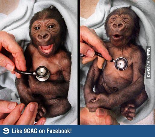Baby monkey meets Cold stethoscope