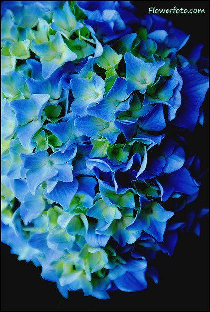 Google Image Result for http://www.flowersflower.net/image/blueflower128.jpg