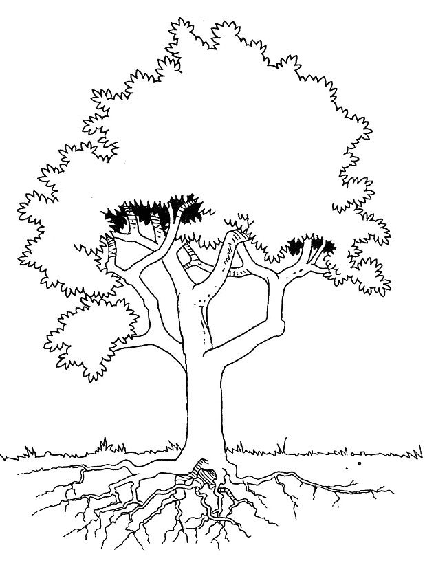 The Tree Is Seen In Detail Coloring Pages Tree Coloring Page Coloring Pages Roots Drawing
