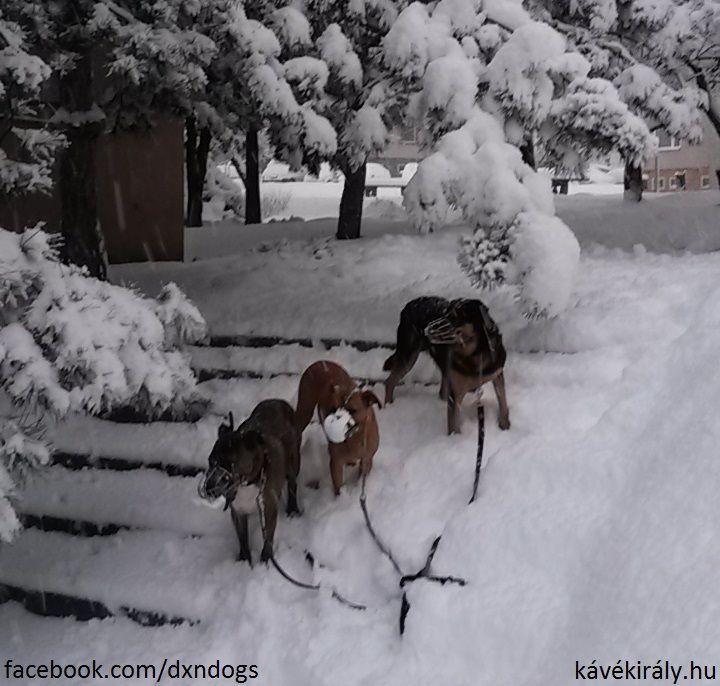 3 kutyám a hatalmas 2017-es téli hóban. Miskolc, Avas, Magyarország