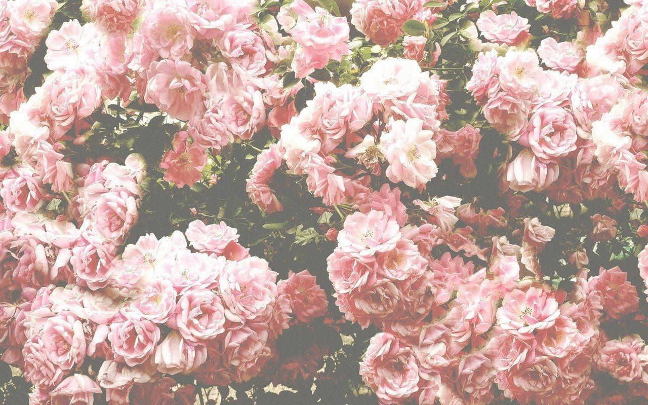 Desktop Wallpaper Flowers Aesthetic In 2020 Flower Background Wallpaper Flower Aesthetic Tumblr Flower