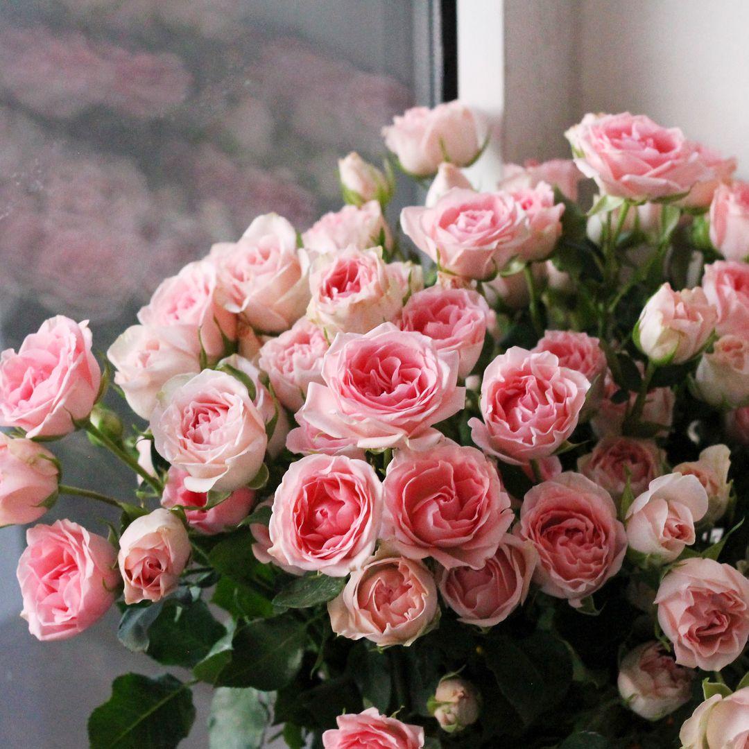 розы мелкие кустовые фото