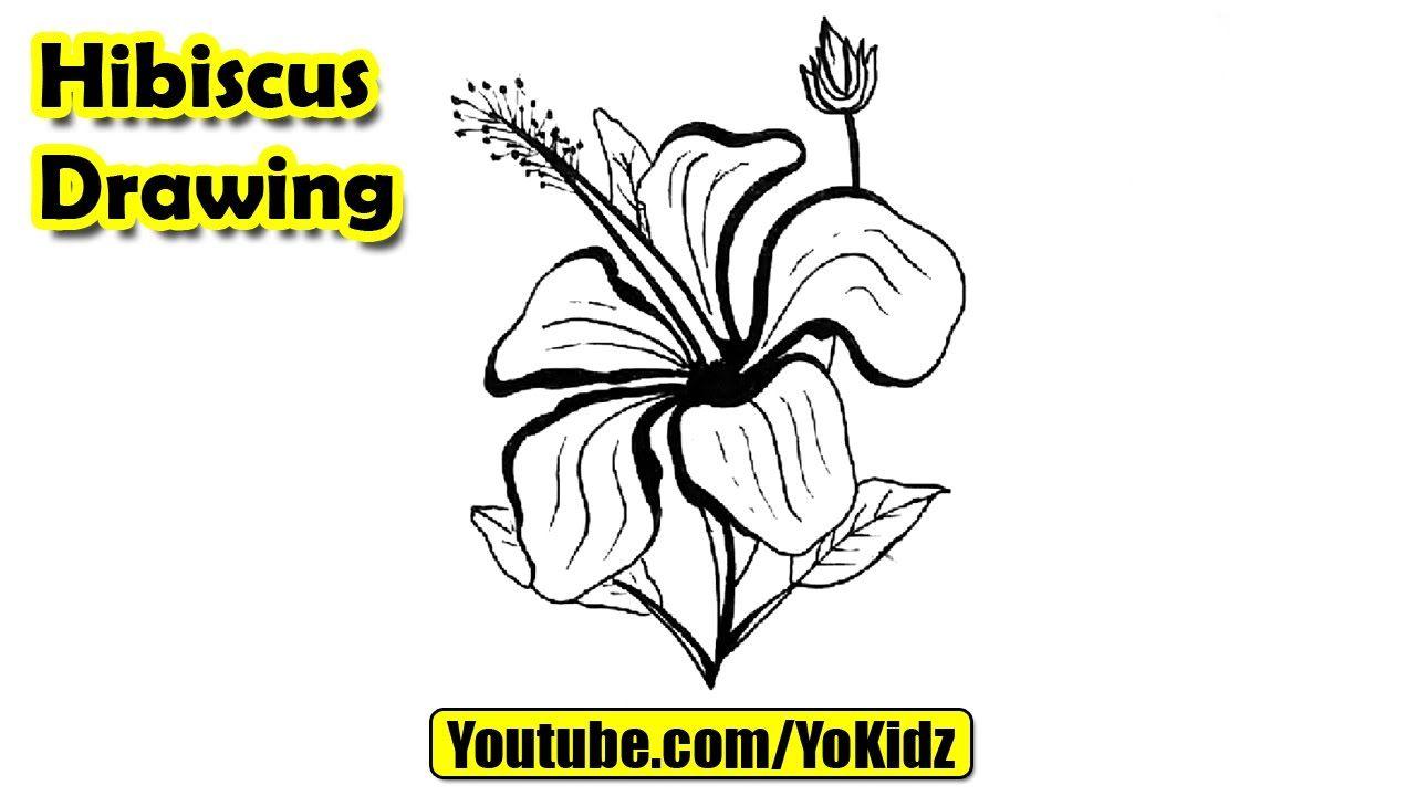 How To Draw Hibiscus Flower Flower Drawing From Yokidz Yokidz