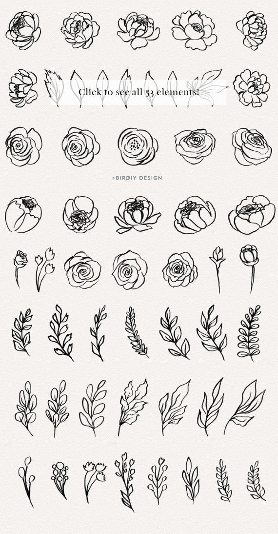 Botanical Illustration - Floral Clipart - Flowers