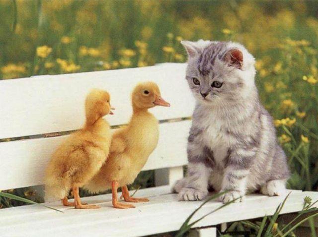 17 Reasons Having a Kitten Is Better Than Having A ...