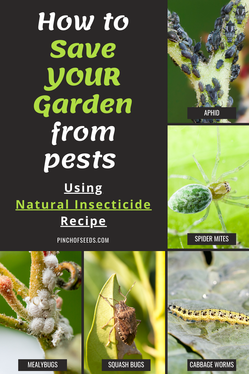 Photo of How to save your garden from pests