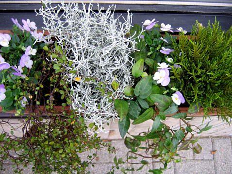 Winterharde Potplanten Buiten.Bloembakken Opvullen Met Winterharde Planten Planten