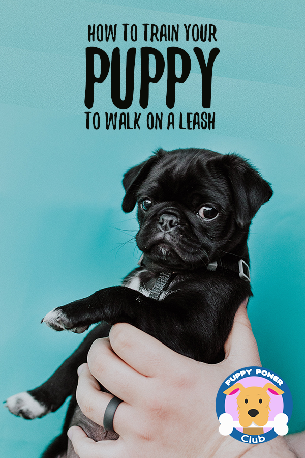 How To Train Your Puppy To Walk On A Leash Puppy Power Club Training Your Puppy Puppies Puppy Training Tips