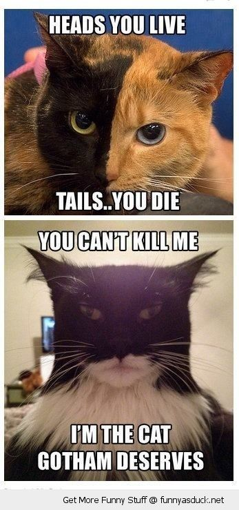 Harvey Dent Two Face Batman Cats Animals Dark Night Movie Film
