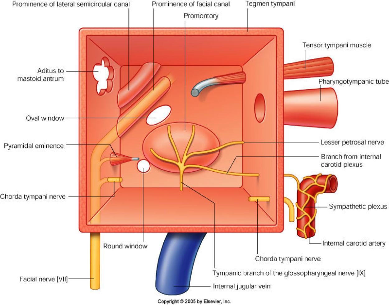 walls tympanic cavity - Cerca con Google | Anatomy | Pinterest