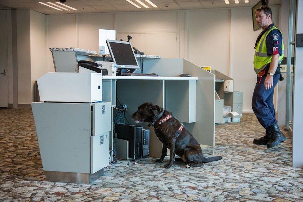Cani di professione - Il Post