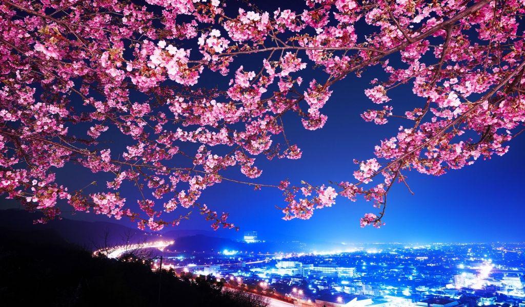 Lovely Cherry Blossom Tree HD Wallpaper, http://www ...