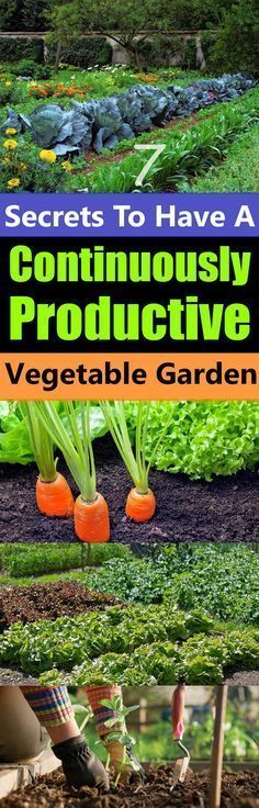7 Secrets To Have A Continuously Productive Vegetable Garden Don't you want a garden that will not only produce a bountiful harvest of fresh… Secrets To Have A Continuously Productive Vegetable Garden Don't you want a garden that will not only produce a bountiful harvest of fresh…Don't you want a garden that will not only produce a bountiful harvest of fresh…