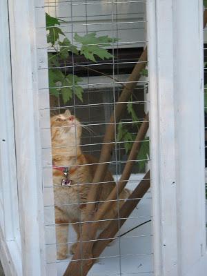 VeganMom...stumbling through life: Peter Young B-D, king of the cat house