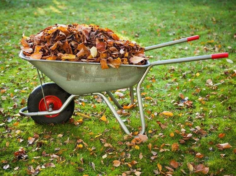 Découvrez comment recycler les feuilles mortes au jardin en 5 idées