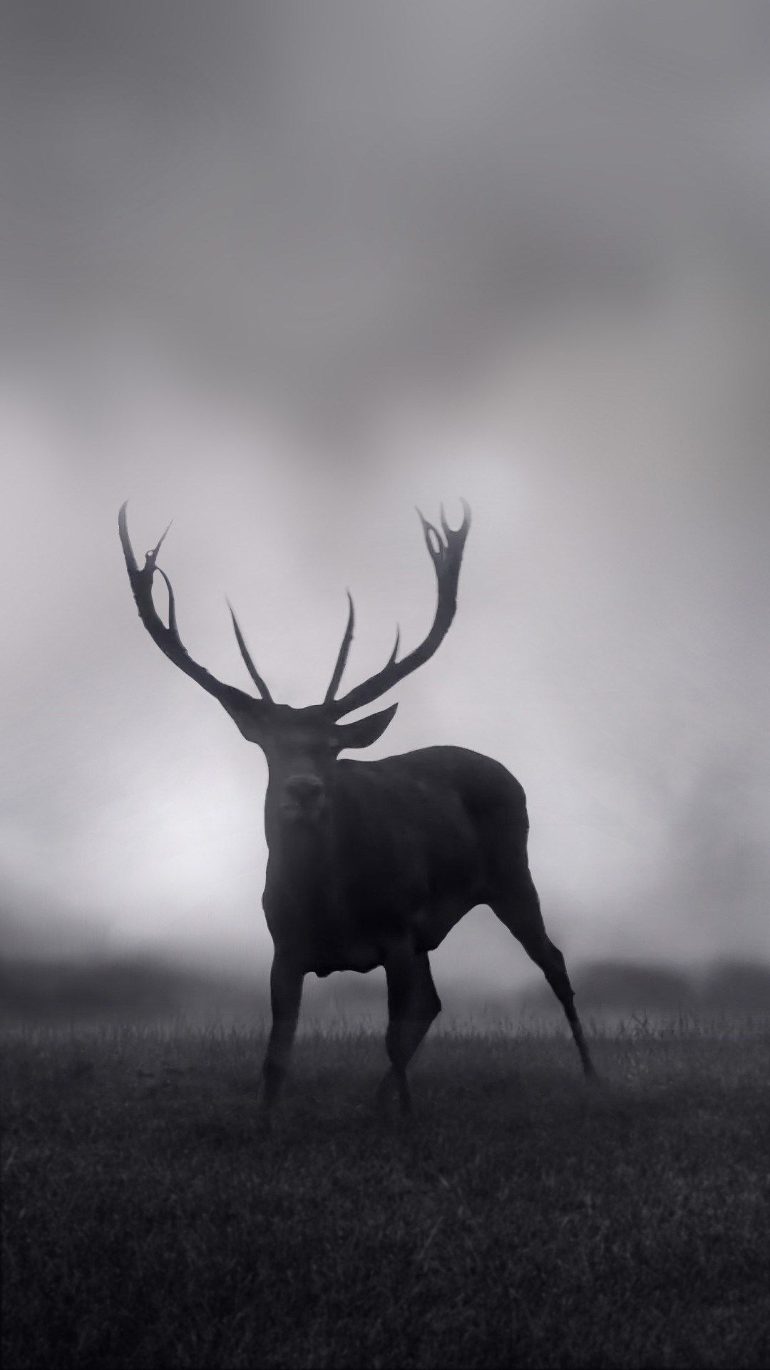 free download deer wallpapers iphone 7 and 7 plus jetblack