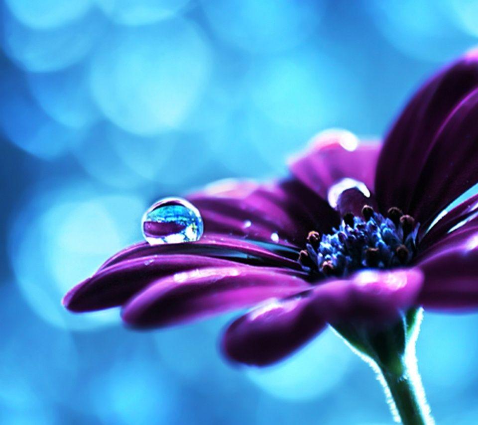 Hintergrundbilder Blume 730 Malvorlage Hintergrundbilder ...