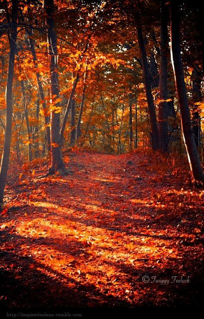 Fall in New England pin by Home LifeStyle Media Marketing  #fallcolors
