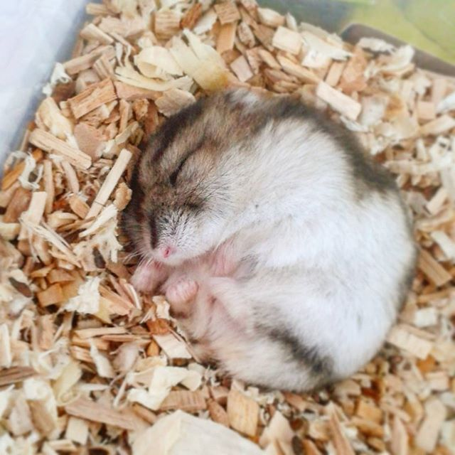 7 Adorable Hamsters That Will Make Your Day A Little Bit Better