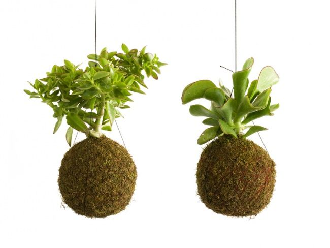 le kokedama les plantes suspendues suspension plante plantes et suspension. Black Bedroom Furniture Sets. Home Design Ideas