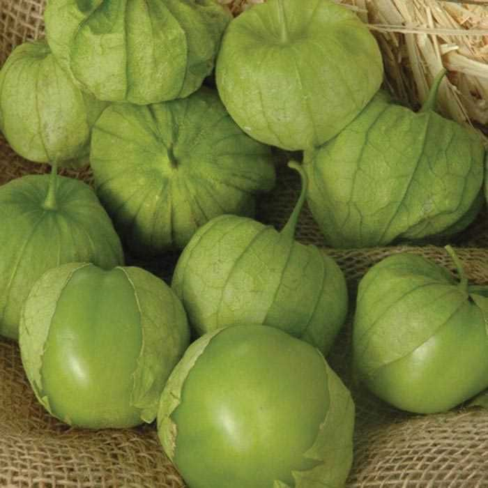 Buy Hybrid Cabbage Seeds Extra Large Circle Heads Are Jam Packed With Crispy White Ribbed Green Outer Leaves And Yellow In Vegetable Seed Cabbage Seeds Seeds
