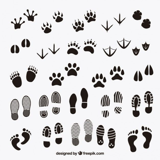 動物と人間の足跡の影を無料でダウンロード 動物の足跡 しおり