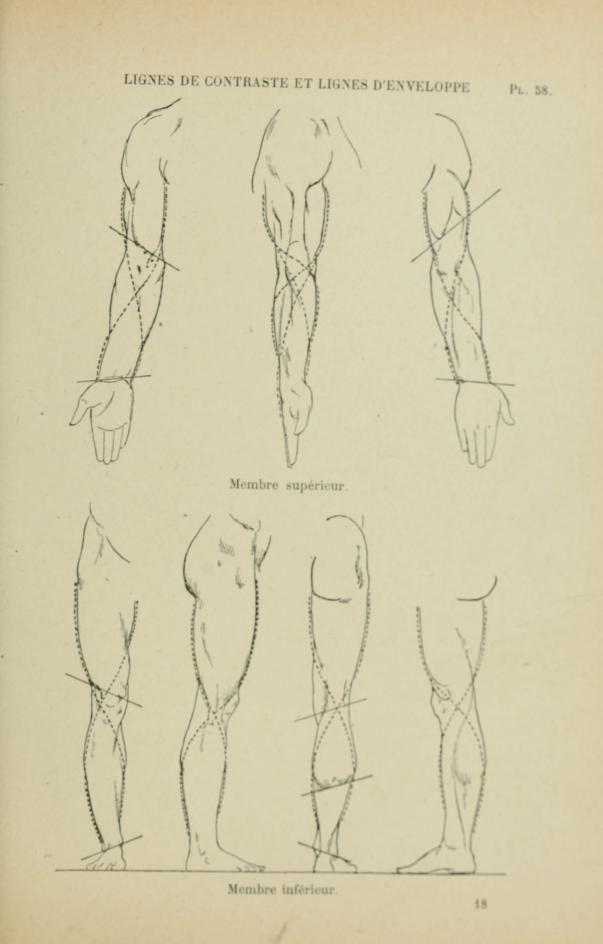 Nouvelle anatomie artistique du corps humain .. | human skeletons ...