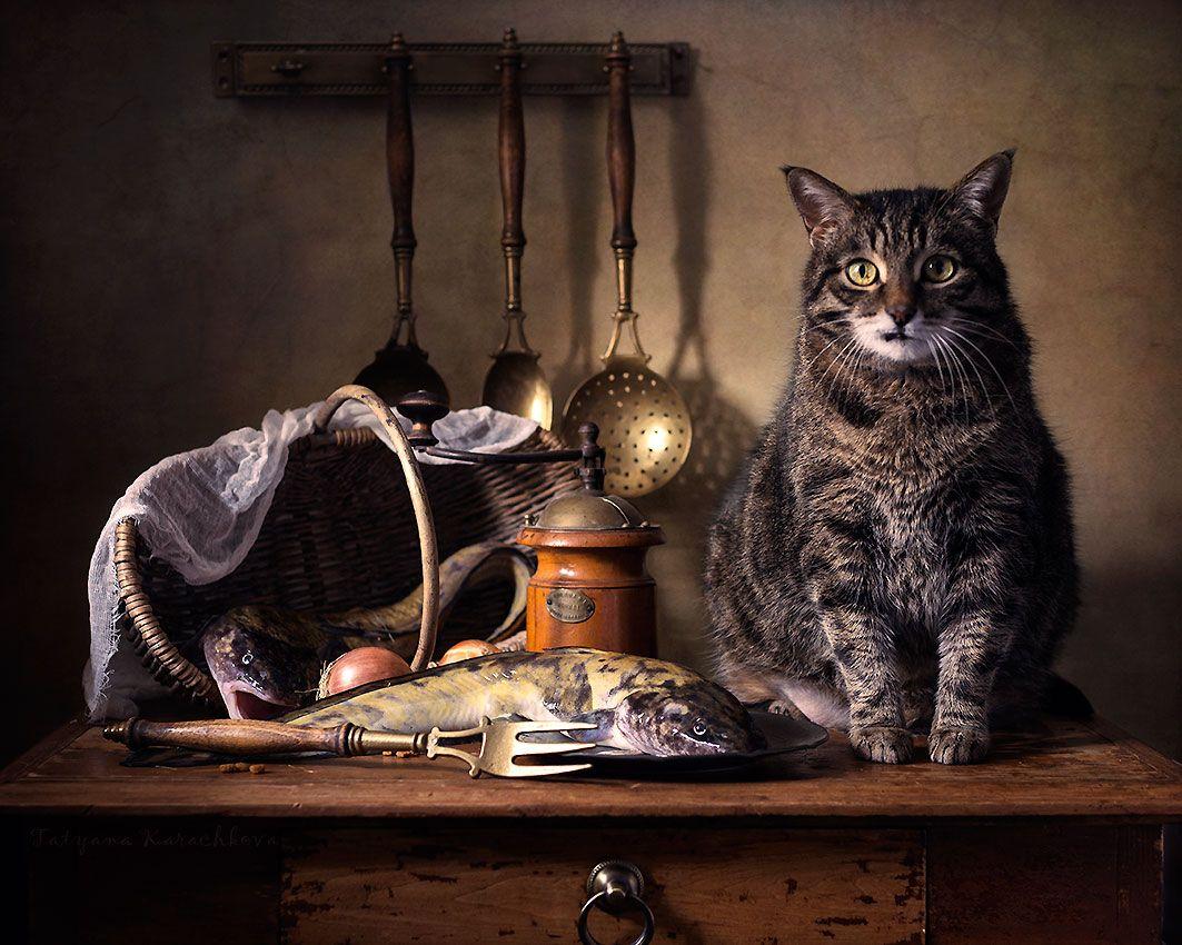 поговорим стрижках, картинки фотонатюрморты с кошками яркой изюминкой каждой
