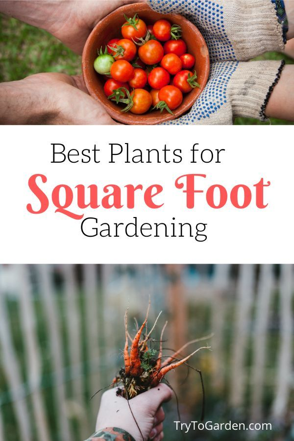 Best Plants for Square Foot Gardening - Try To Garden