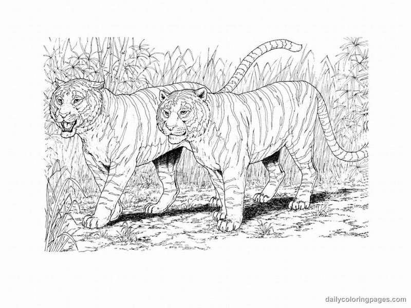 Realistic Animal Tigers Coloring Pages For Adults