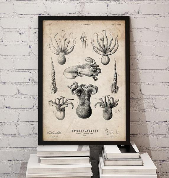 Octopus anatomy print   Codex Anatomicus - Anatomy art and gifts ...