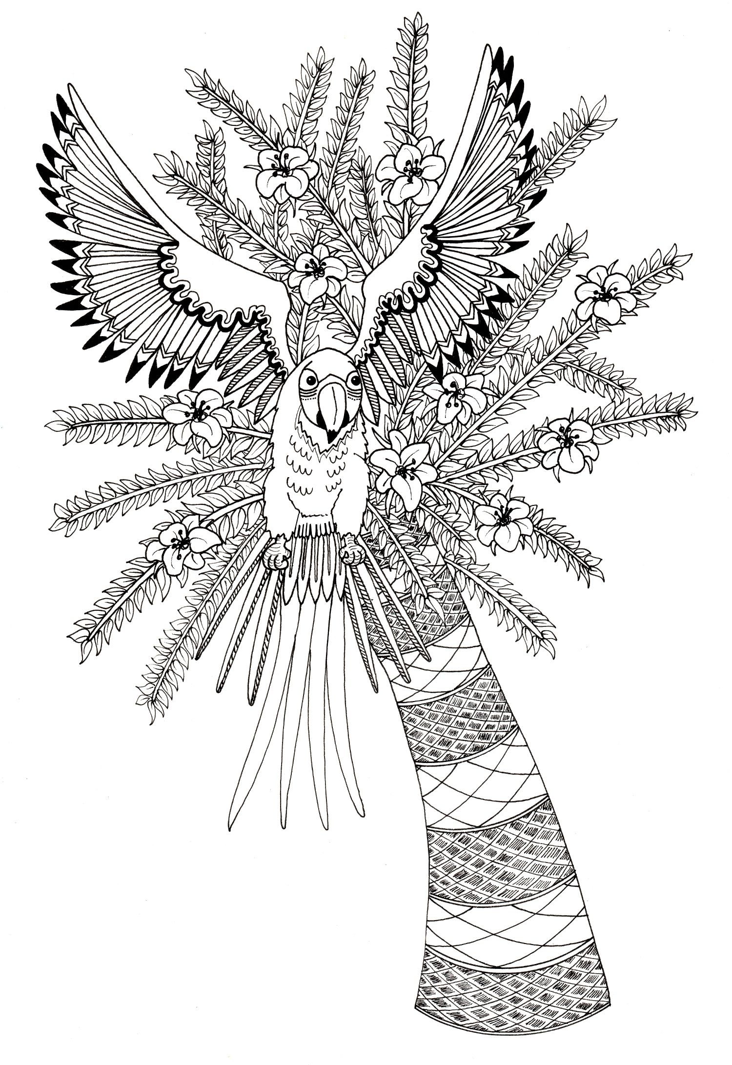 Parrot Design For Adult Colouring In I Am Working On Getting A Book Made So Please If You Print It Out To Try Show Me